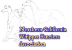 Northern California Whippet Fanciers Association